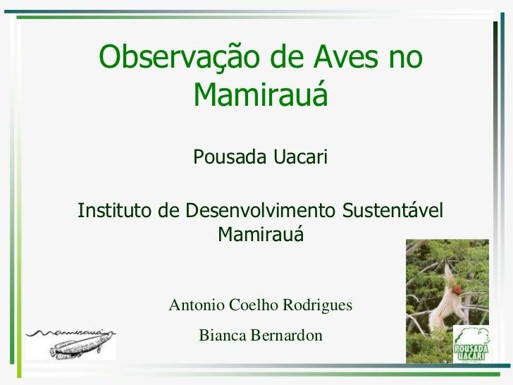 11/5/2011<br />1<br />Observação de Aves no Mamirauá<br />Pousada Uacari<br />Instituto de Desenvolvimento Sustentável Mam...