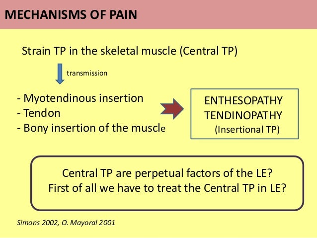 Strain TP in the skeletal muscle (Central TP) transmission - Myotendinous insertion - Tendon - Bony insertion of the muscl...