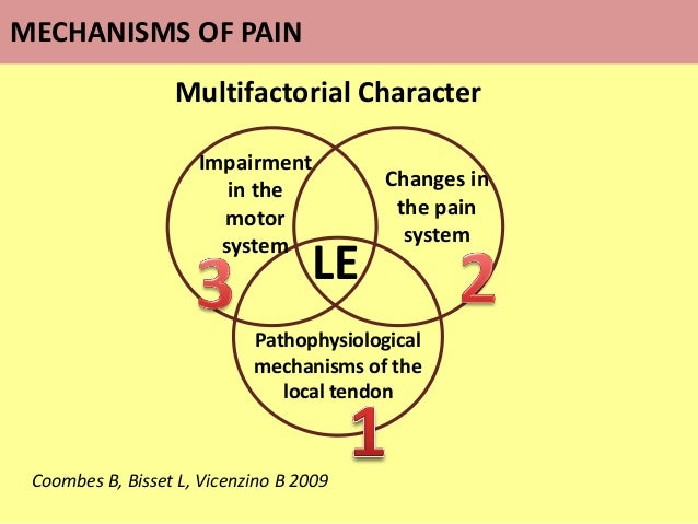 MECHANISMS OF PAIN Multifactorial Character Coombes B, Bisset L, Vicenzino B 2009 Pathophysiological mechanisms of the loc...