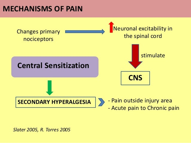 Central Sensitization Changes primary nociceptors Neuronal excitability in the spinal cord CNS stimulate SECONDARY HYPERAL...