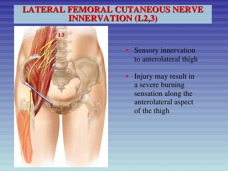 pain and neuralgia after hernia surgery: can it be avoided? and how d…, Muscles