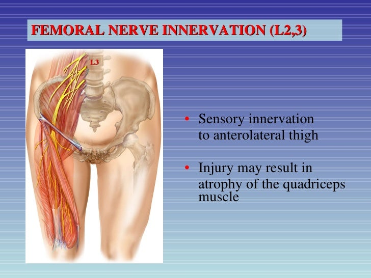 femoral nerve neuropathy treatment – applecool, Muscles