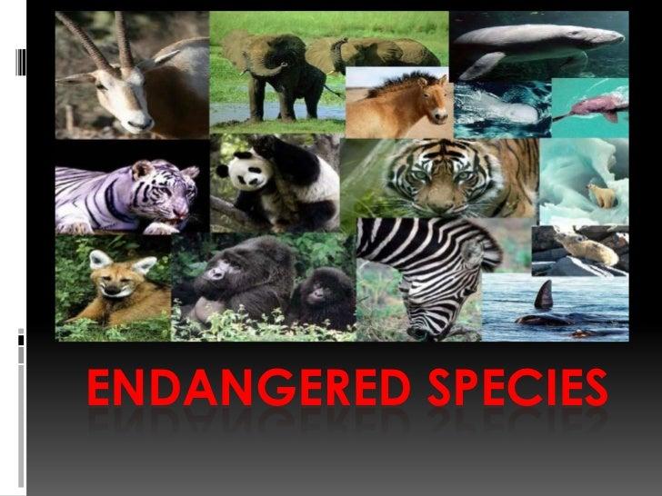 Endangered Species <br />