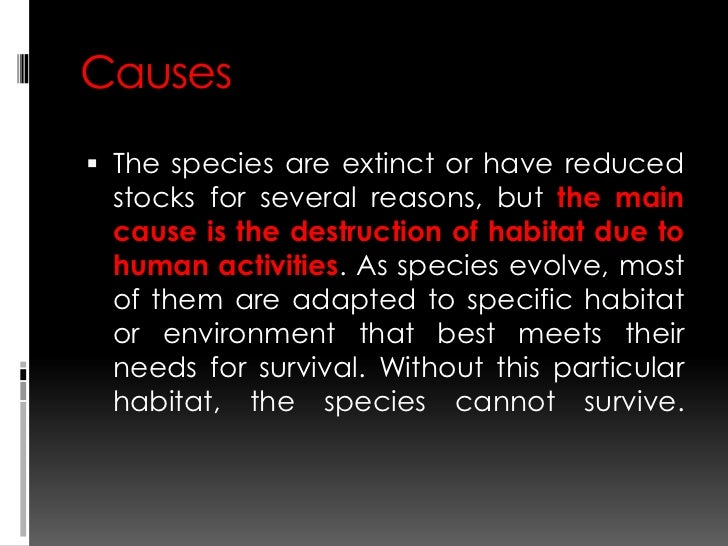 a description of cheetah and its status as an endangered species Thank you for taking the time to provide feedback on the iucn red list of threatened species website, we are grateful for your input.