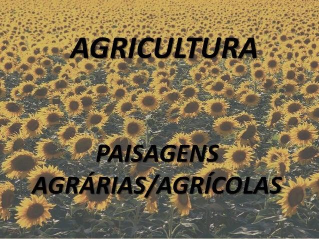 AGRICULTURA  PAISAGENS AGRÁRIAS/AGRÍCOLAS
