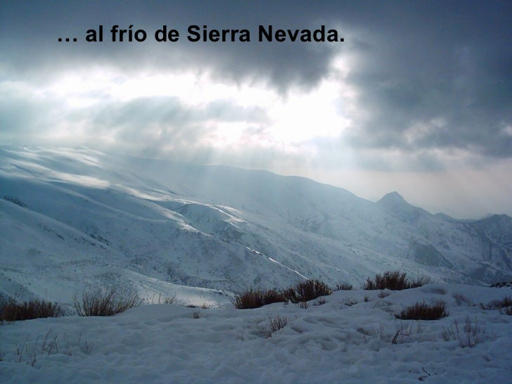<ul><li>…  al frío de Sierra Nevada. </li></ul>