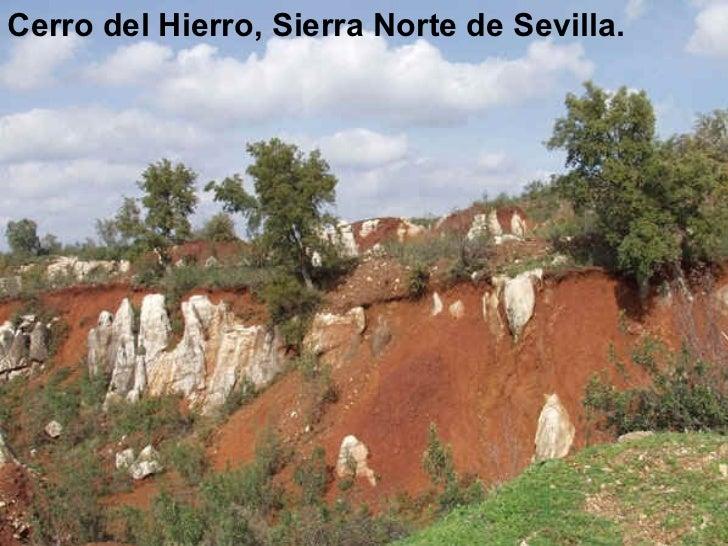 <ul><li>Cerro del Hierro, Sierra Norte de Sevilla. </li></ul>