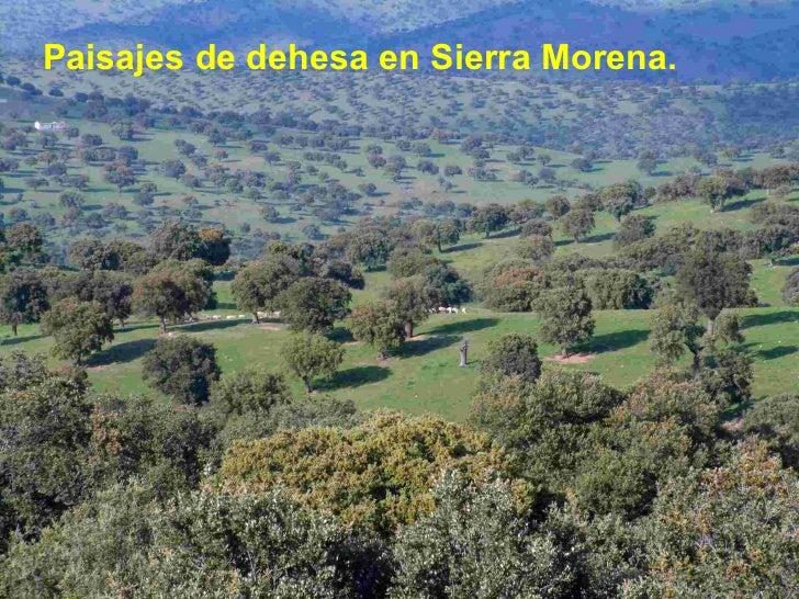 <ul><li>Paisajes de dehesa en Sierra Morena. </li></ul>