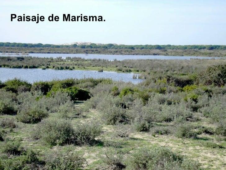 <ul><li>Paisaje de Marisma. </li></ul>