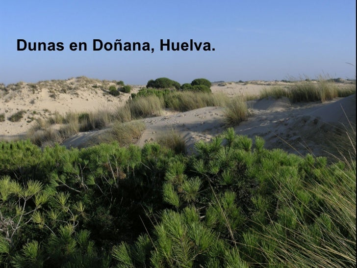 <ul><li>Dunas en Doñana, Huelva. </li></ul>