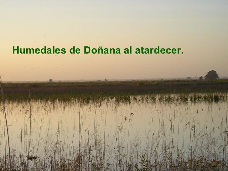 <ul><li>Humedales de Doñana al atardecer. </li></ul>