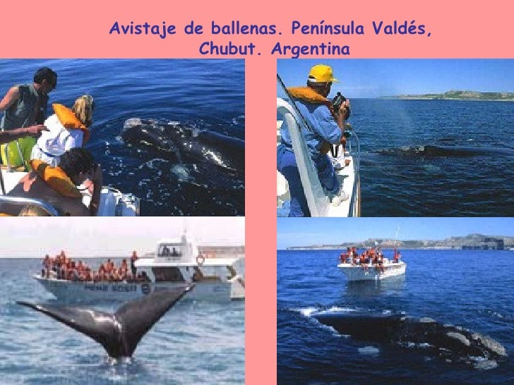 Avistaje de ballenas. Península Valdés, Chubut. Argentina