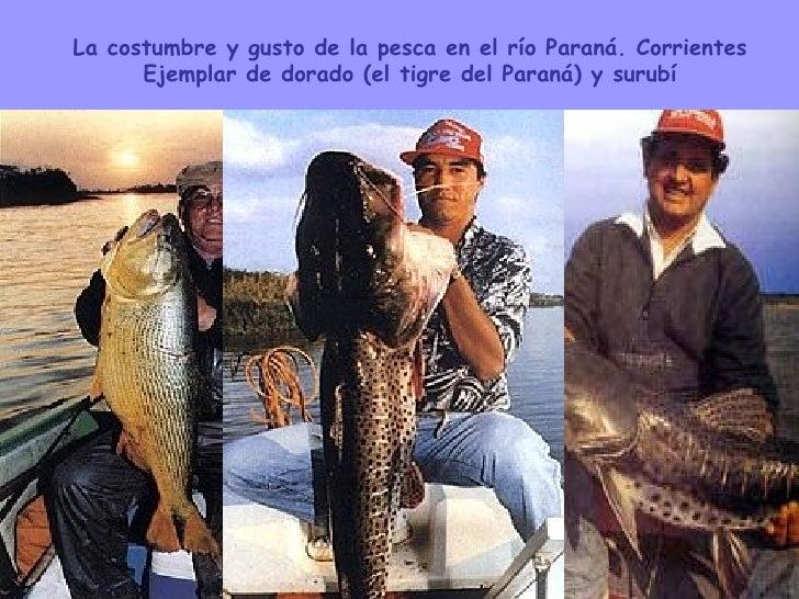 La costumbre y gusto de la pesca en el río Paraná. Corrientes Ejemplar de dorado (el tigre del Paraná) y surubí