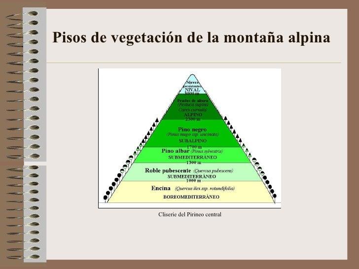 Paisajes vegetales de espa a for Pisos de vegetacion canarias
