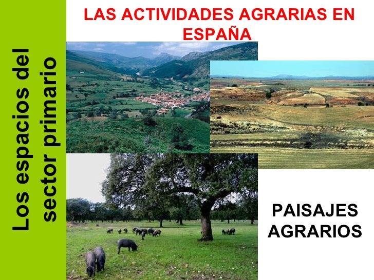 Los espacios del sector primario LAS ACTIVIDADES AGRARIAS EN ESPAÑA  PAISAJES AGRARIOS