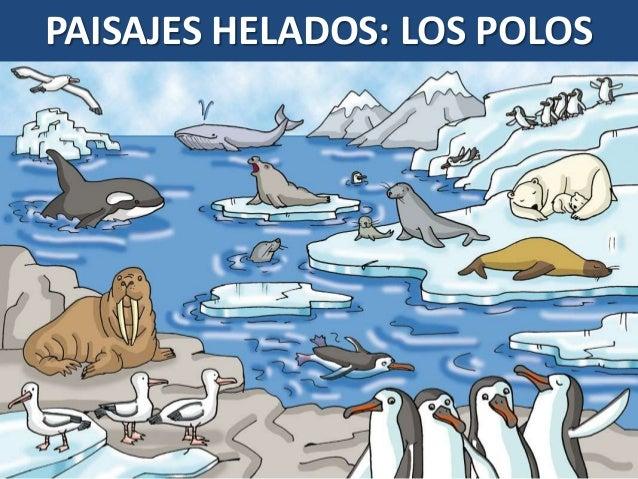 Paisajes helados: POLO NORTE Y POLO SUR. Fauna, costumbres ...
