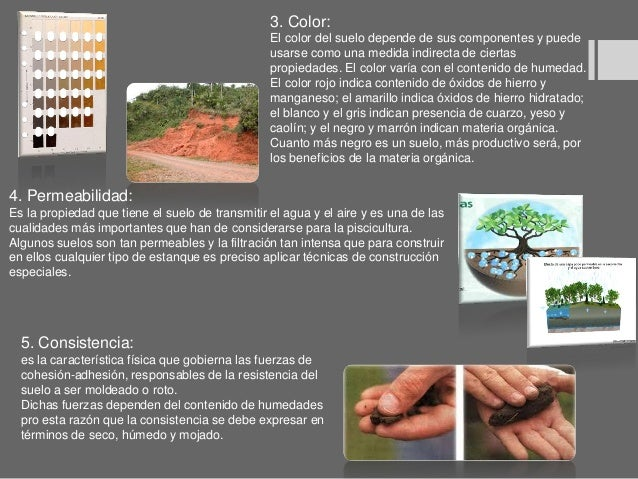 Paisajismo tipos de suelos y plantas for Tipo de suelo 1