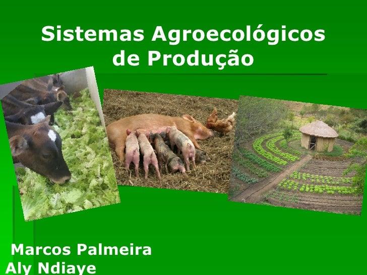 Sistemas Agroecológicos          de Produção     Marcos Palmeira Aly Ndiaye