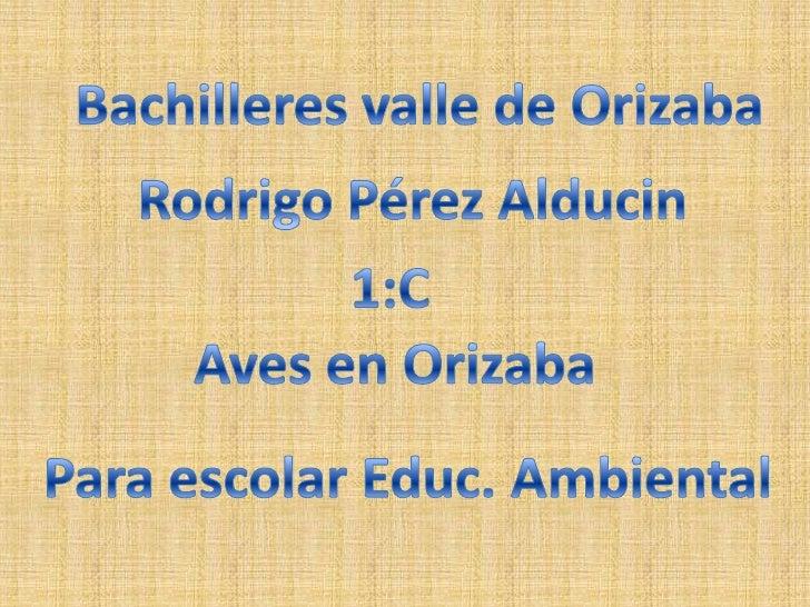 Bachilleres valle de Orizaba<br />Rodrigo Pérez Alducin<br />1:C<br />Aves en Orizaba<br />Para escolar Educ. Ambiental<br />