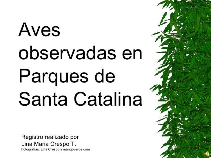 Aves  observadas en Parques de  Santa Catalina Registro realizado por  Lina Maria Crespo T. Fotografías: Lina Crespo y man...
