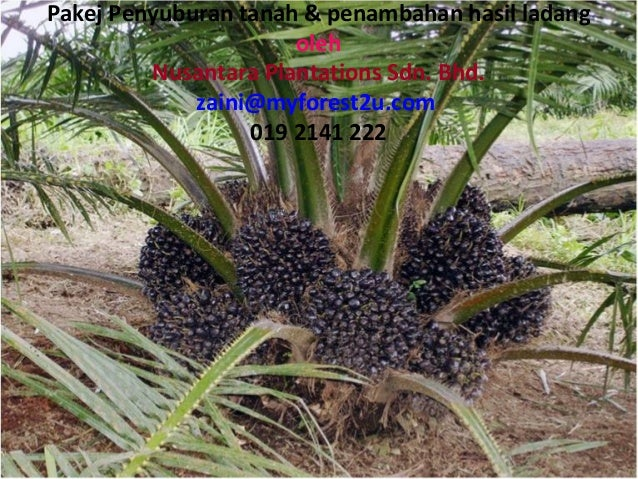Pakej Penyuburan tanah & penambahan hasil ladangolehNusantara Plantations Sdn. Bhd.zaini@myforest2u.com019 2141 222