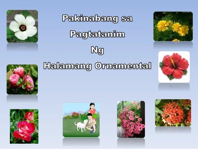 Pakinabang sa pagtatanim ng Halamang Ornamental Nilalaman: Sa araling ito, matutunan ng mga mag-aaral ang kahalagahang dul...