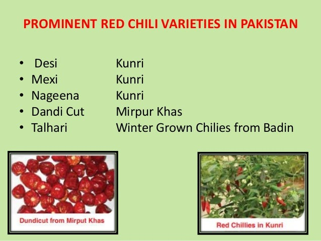 Pakistan chilli production scenario by Tariq Sarwar Awan, Food Techn…