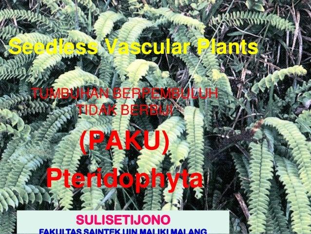 Seedless Vascular Plants TUMBUHAN BERPEMBULUH TIDAK BERBIJI (PAKU) Pteridophyta SULISETIJONO