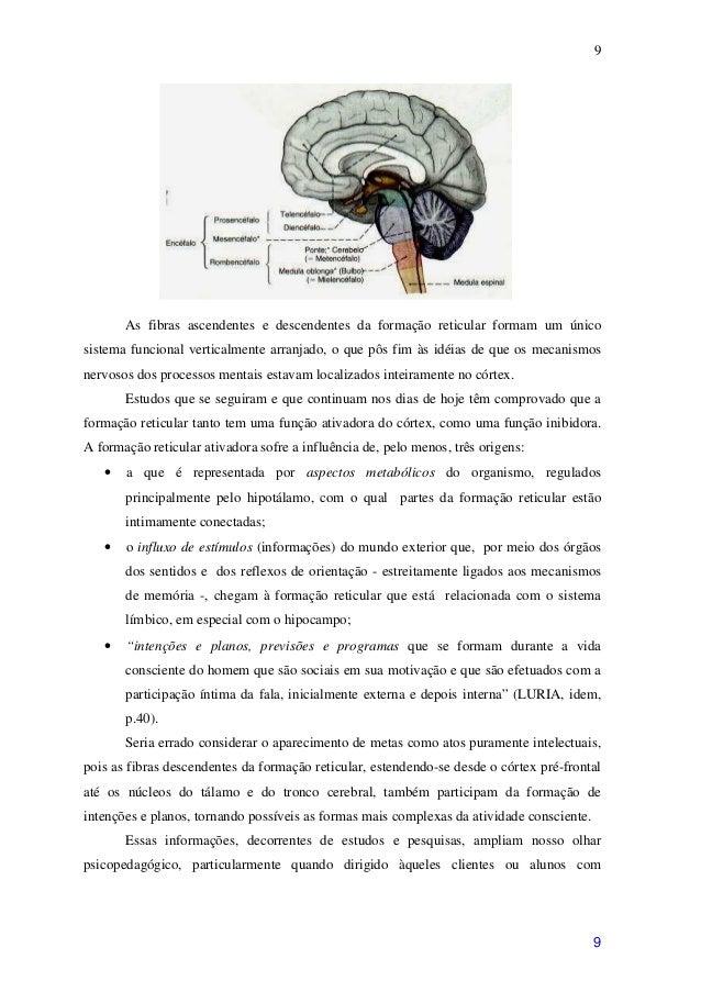 9       As fibras ascendentes e descendentes da formação reticular formam um únicosistema funcional verticalmente arranjad...