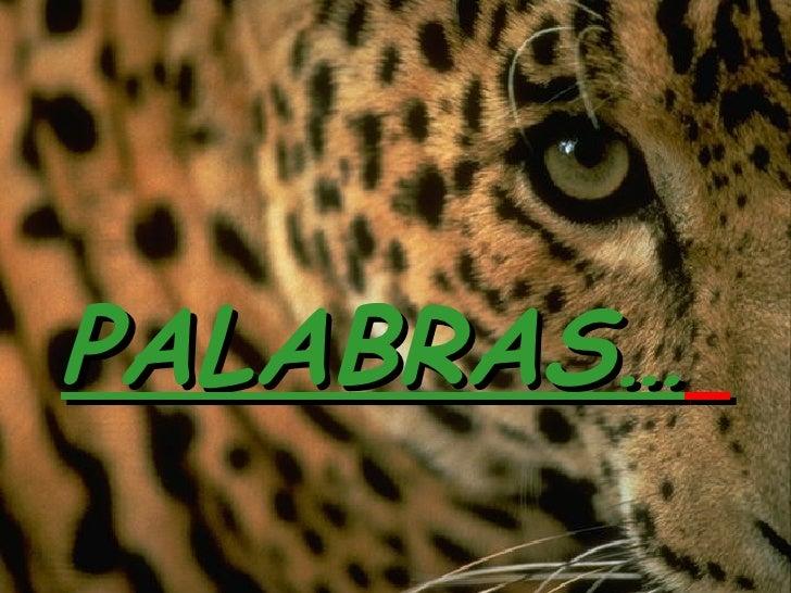 PALABRAS…