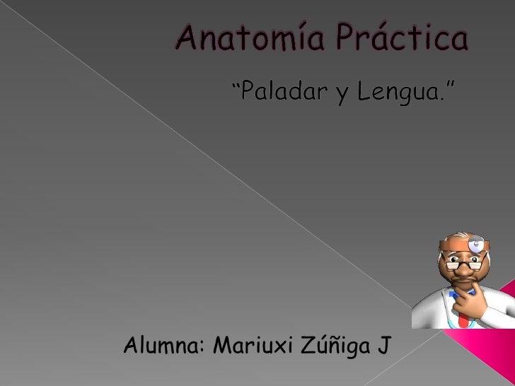 """Anatomía Práctica<br />""""Paladar y Lengua.""""<br />Alumna: Mariuxi Zúñiga J<br />"""