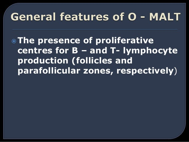 The presence of proliferative centres for B – and T- lymphocyte production (follicles and parafollicular zones, respectiv...