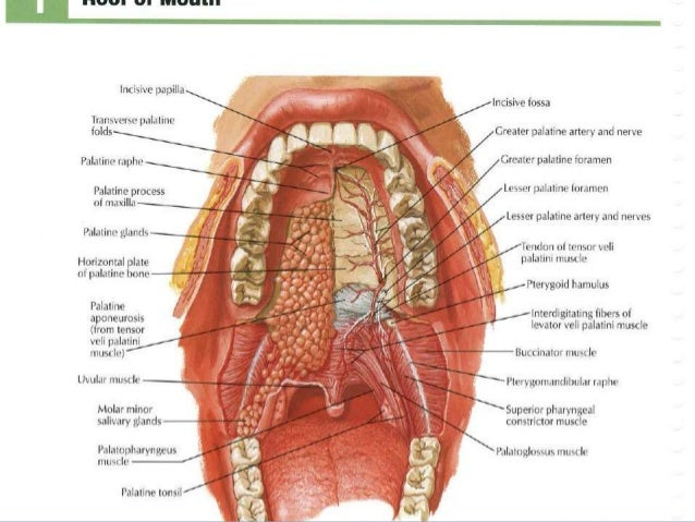 8060752 moreover DF 10 further 5153064 moreover Introduction To Anatomy 5510316 in addition 8374700. on ventral cavity
