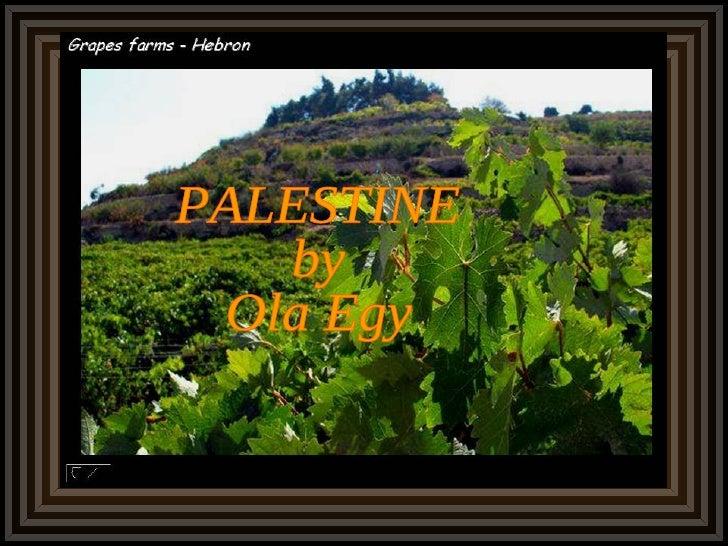 PALESTINE by Ola Egy