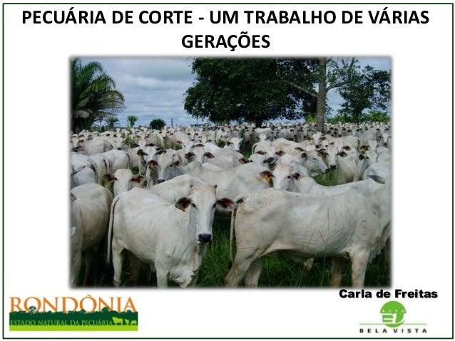 PECUÁRIA DE CORTE - UM TRABALHO DE VÁRIAS GERAÇÕES  Carla de Freitas