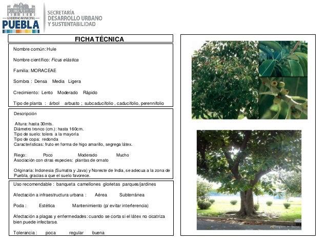 Catálogo de Especies Permitidas para la Restitución de la Masa