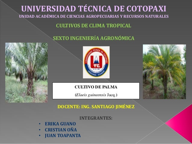 CULTIVO DE PALMA (Elaeis guineensis Jacq.) UNIVERSIDAD TÉCNICA DE COTOPAXI UNIDAD ACADÉMICA DE CIENCIAS AGROPECUARIAS Y RE...