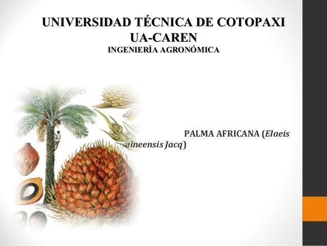 UNIVERSIDAD TÉCNICA DE COTOPAXI UA-CAREN INGENIERÍA AGRONÓMICA  PALMA AFRICANA (Elaeis guineensis Jacq)