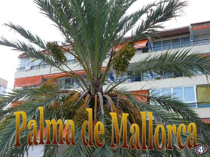 Palma de Mallorca 4