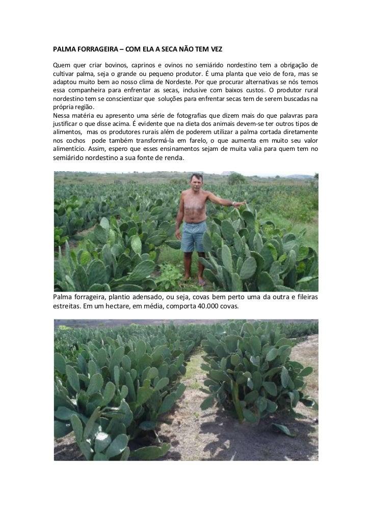 PALMA FORRAGEIRA – COM ELA A SECA NÃO TEM VEZQuem quer criar bovinos, caprinos e ovinos no semiárido nordestino tem a obri...