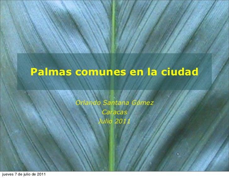 Palmas comunes en la ciudad                            Orlando Santana Gómez                                    Caracas   ...