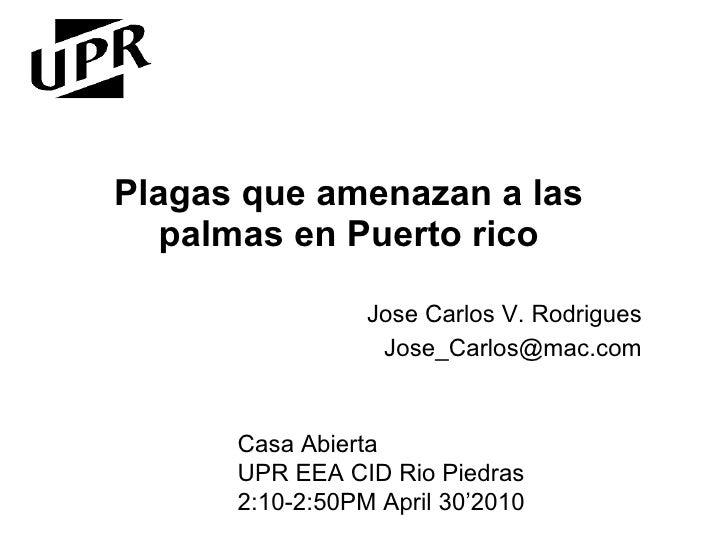 Plagas que amenazan a las palmas en Puerto rico Jose Carlos V. Rodrigues [email_address] Casa Abierta UPR EEA CID Rio Pied...