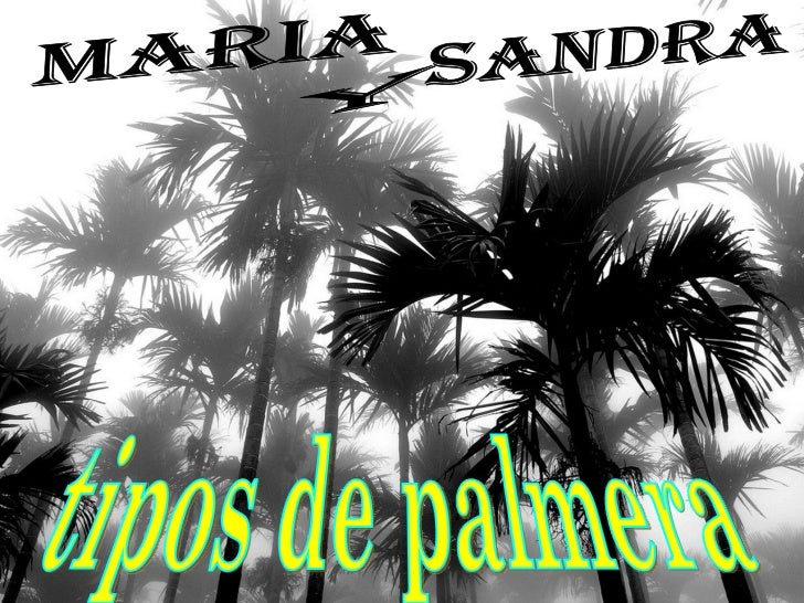 Tipos De Palmáceas