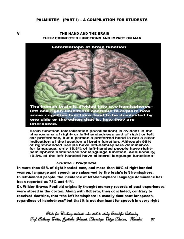 Sexual personae lateralization of the brain
