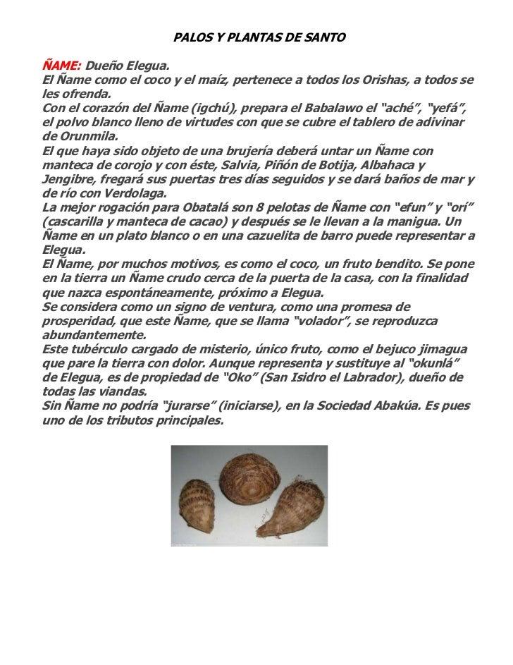 PALOS Y PLANTAS DE SANTOÑAME: Dueño Elegua.El Ñame como el coco y el maíz, pertenece a todos los Orishas, a todos seles of...