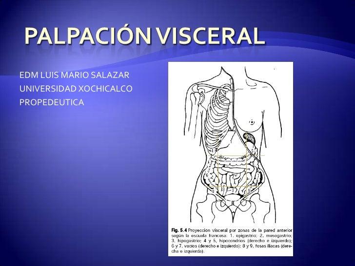 PalpaciónVisceral<br />EDM LUIS MARIO SALAZAR<br />UNIVERSIDAD XOCHICALCO<br />PROPEDEUTICA <br />