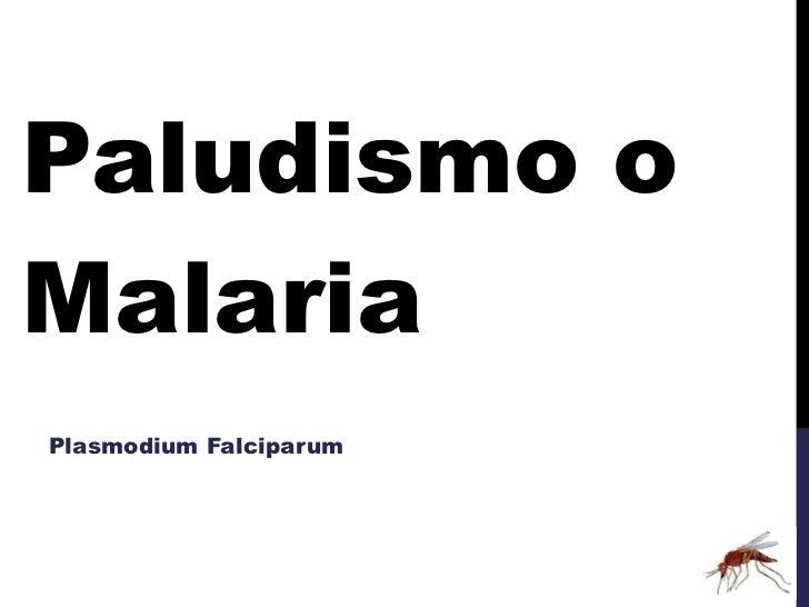 Paludismo o Malaria Plasmodium Falciparum