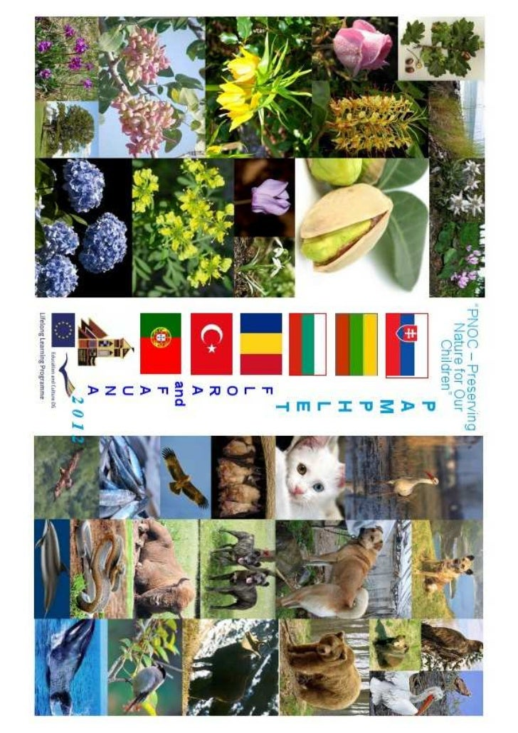 Pamphlet 2012