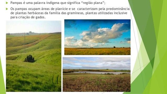 """ Pampas é uma palavra indígena que significa """"região plana"""";  Os pampas ocupam áreas de planície e se caracterizam pela ..."""