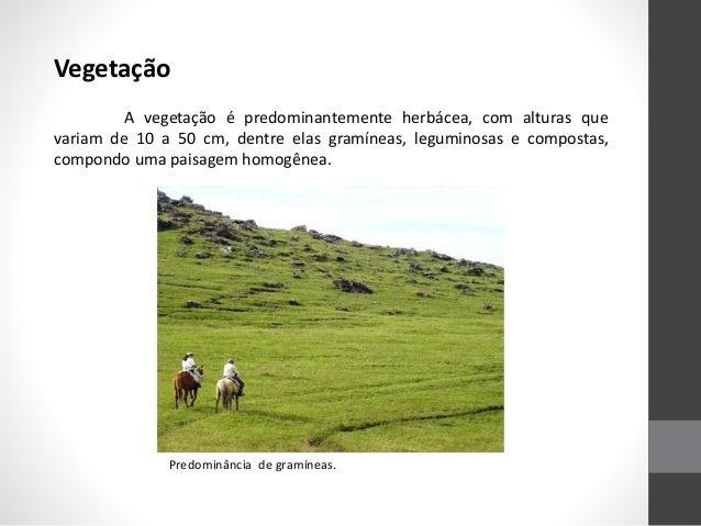 Vegetação A vegetação é predominantemente herbácea, com alturas que variam de 10 a 50 cm, dentre elas gramíneas, leguminos...